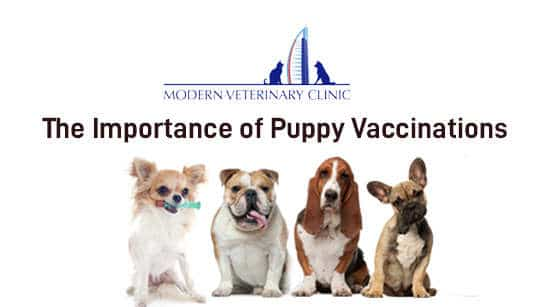 The Importance of Puppy Vaccinations