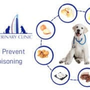 How to Prevent Pet Poisoning | Pet Poisoning Prevention Tips