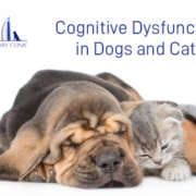 Cognitive Dysfunction in Dogs and Cats
