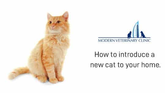 New Cat at Home – How to Introduce a New Cat and Avoid Conflicts?