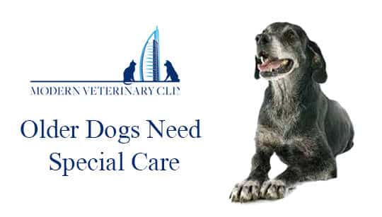 Older Dogs Need Special Care