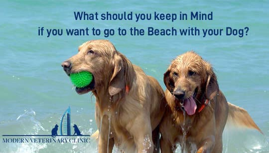 What Should You Keep in Mind If You Want to Go to the Beach with Your Dog?