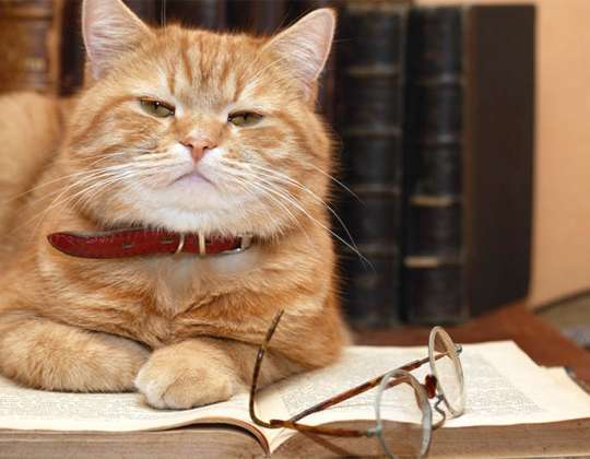 All about a cat's memory: Why cats are smarter than you think