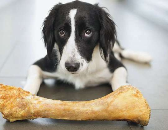 SHOULD I BE GIVING MY DOG BONES?