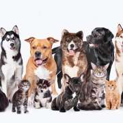 Hypoallergenic Dogs and Cats