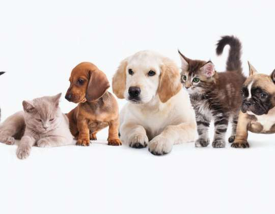 Adoption Tips for Welcoming a New Pet Into Your Family Home