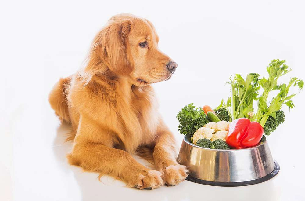 CHANGING YOUR PET FOOD