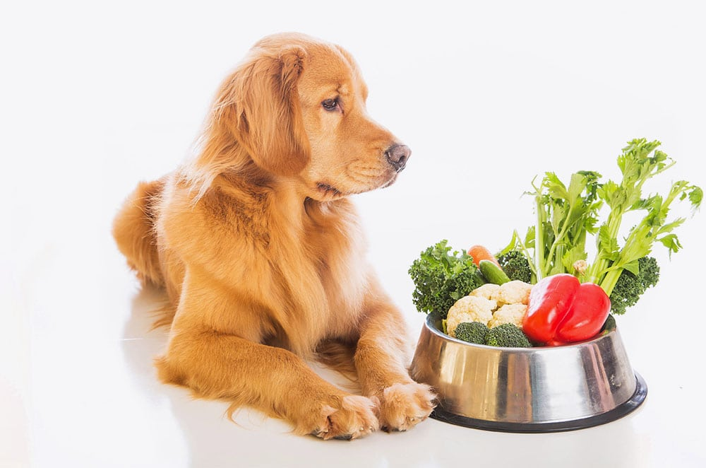 CHANGING YOUR PET'S DIET
