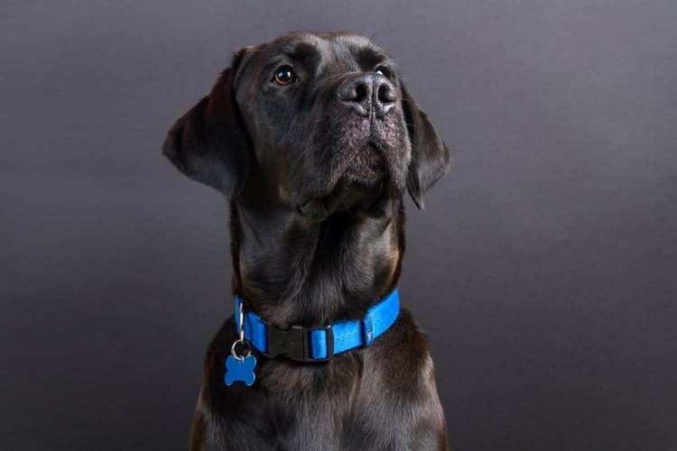 How To Choose The Perfect Collar For Your Dog?