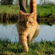 A CAT 'S ABILITY TO FIND THE WAY HOME