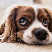 HOW TO MINIMIZE YOUR PET'S SEPARATION ANXIETY WHEN LEAVING FOR WORK?