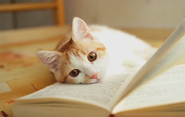 A CAT INTELLIGENCE: MYTH OR FACT?