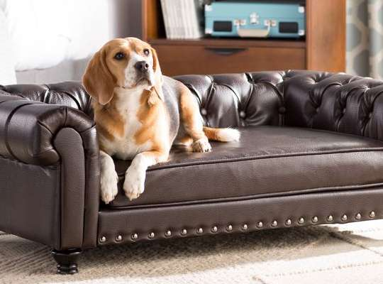 DO YOU NEED TO LET DOGS UP ONTO THE FURNITURE?