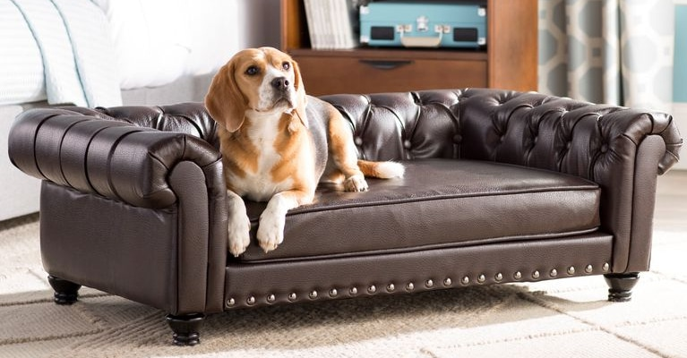 LET DOGS UP ONTO THE FURNITURE?