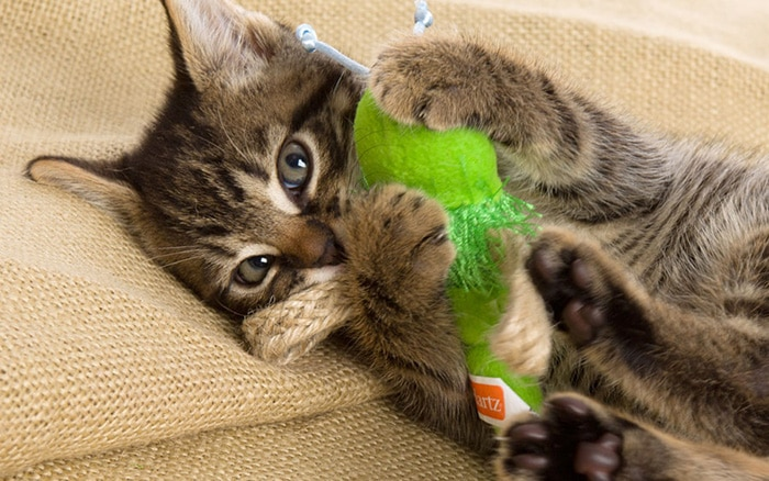 FAVORITE TOYS TO KEEP YOUR CAT ENTERTAINED