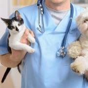 HOW TO PREPARE YOUR PET FOR VISIT TO A VETERINARY CLINIC?