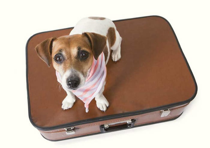 HOW TO SAFELY TRAVEL WITH YOUR PET?