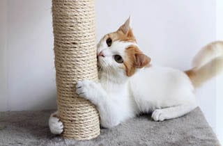 WHAT TO BUY FOR A NEW CAT?