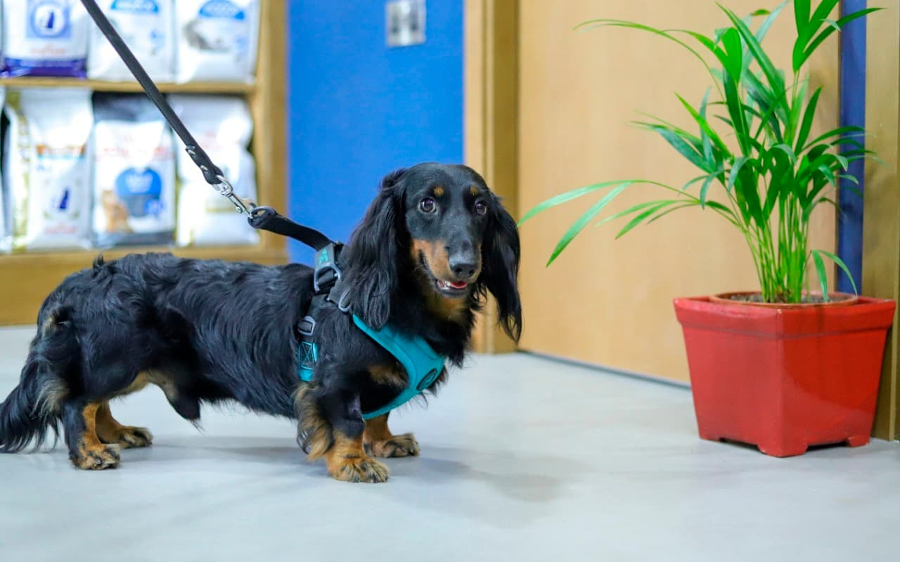 A dog visiting our JLT branch