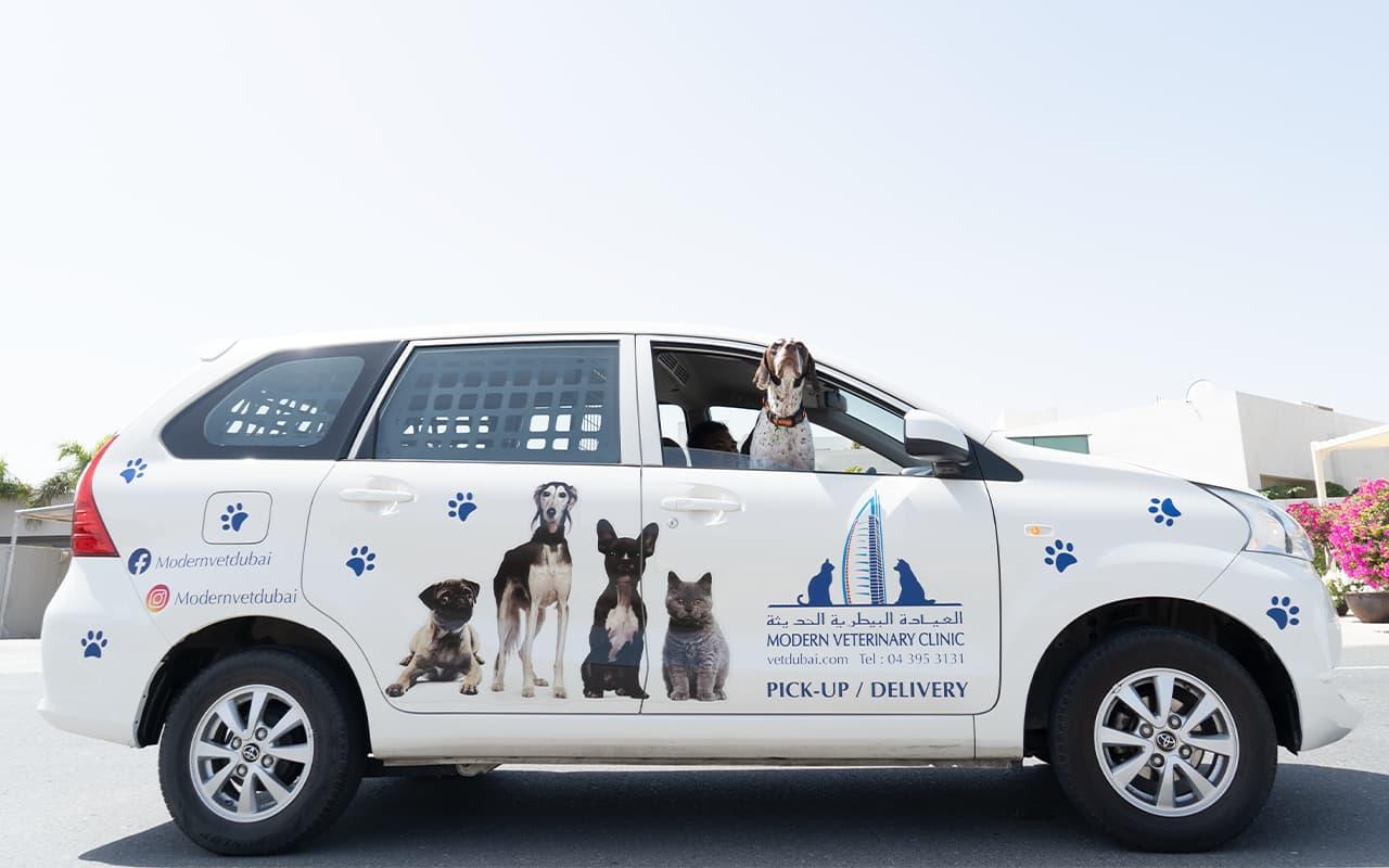A pet taxi service
